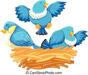 Three blue birds in the nest