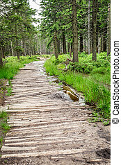 Wooden mountain trail in the forest