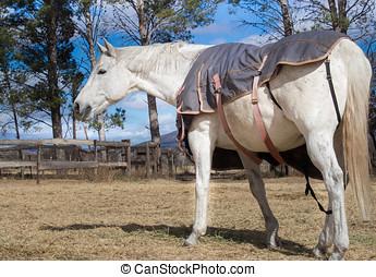 圍場, 白色, 馬