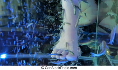 A lady is in a spa getting a fish pedicure. Tiny fish eat...