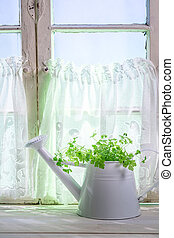 Watering can standing in a sunny window with herbs