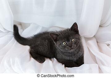 Beautiful little tabby kitten on window sill. British Shorthair breed.
