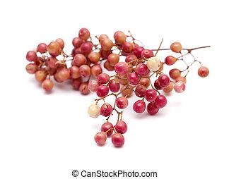 rosa, grano de pimienta, racimos, aislado, en, blanco