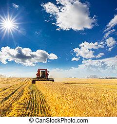 Combine harvester working - combine harvester working on a...