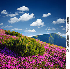 Summer mountain landscape with flowers on a sunny day -...