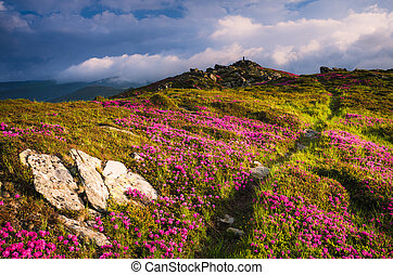 Summer landscape with flowers and hiking trail in the mountains
