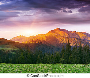 Summer landscape with a beautiful sunrise in the mountains
