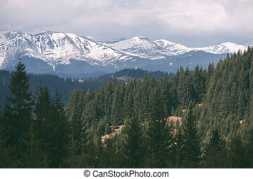 Spring landscape with snowbound mountains and spruce forest...