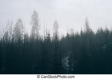 Fog in the forest. Tinted photo - Fog in winter forest....