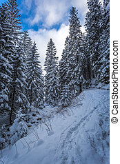 Snowy mountain trail in the woods