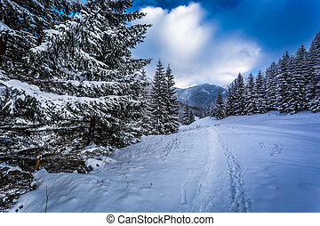 Snow capped forest paths on a mountain trail