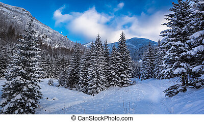 Snowy mountain path in winter