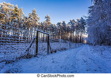 Path in a snowy forest in the morning