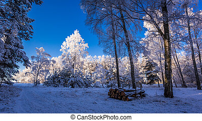 Frozen forest at dawn in winter