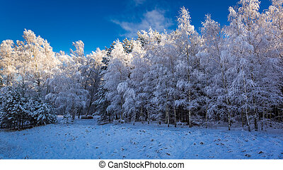 Beautiful frosted forest in winter