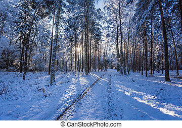 Winter snowy forest in the morning in winter