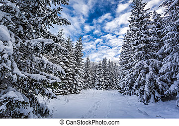 Winter path in snowy forest