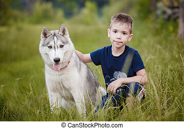 boy playing with husky sitting on grass - boy playing with...