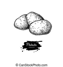 Potato vector drawing. Isolated potatoes heap. Vegetable engraved