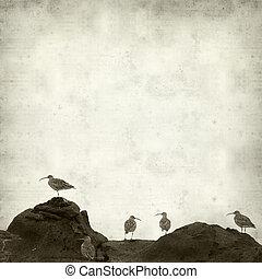 flock of slender-billed curlews - textured old paper...