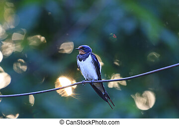 swallow sitting on a wire at sunset