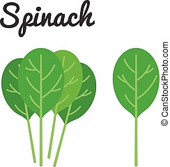 Vector Spinach with text, flat design no background