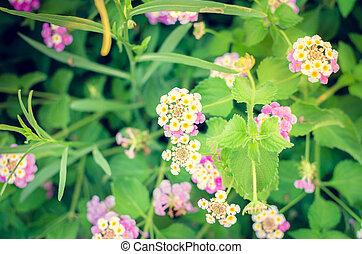 花, 陽光, 背景