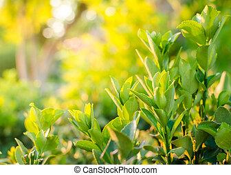 陽光, 綠色, 背景