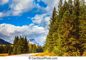 Evergreen coniferous forests - Beautiful nature of the Rocky...
