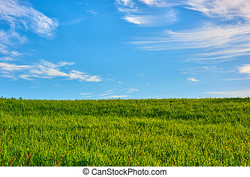 Green hill blue sky - Green grassy hill with blue sky at...