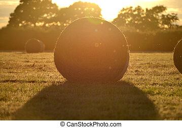 Bails - Fresh hay bails in summer golden light