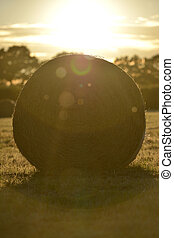 Bails - Fresh hay bails in summer golden light