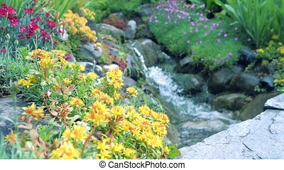 Yellow garden flowers in the foreground. In the background, a river on the rocks. Camera movement makes it possible to see the flower on all sides of the flower. Staged shooting.