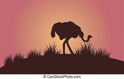 Silhouette of Ostrich in the fields