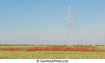 New high voltage power lines on poppy field in Crimea - New...