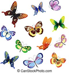 illustration of butterflies of different