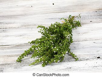 Blooming summer savory, lat. Satureja hortensis - It is...
