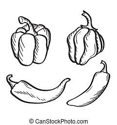Yand drawn chili peppers and paprika. - Artistic hand drawn...