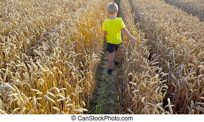 boy walking in field - boy walking in wheat field