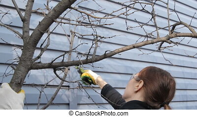 Woman cuts off the branches by pruner. Side view. - Woman...