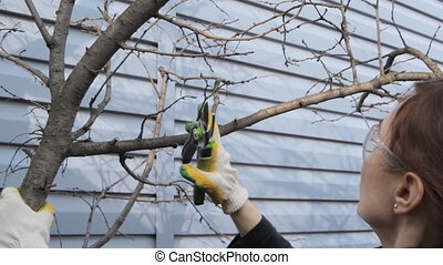 Woman cuts off the branches by pruner. Front view. - Woman...