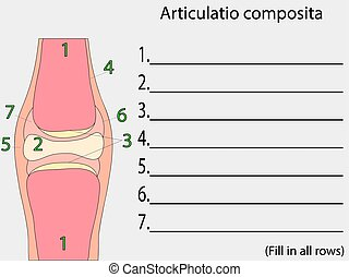 Complex joint vector. Education anatomical atlas - Complex...