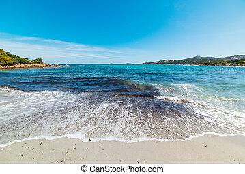 flautín, Pevero, playa, debajo, Un, claro, cielo