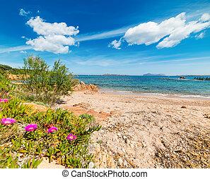 Romazzino beach in Costa Smeralda, Italy