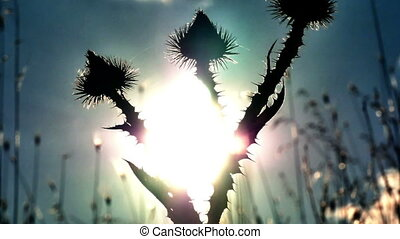 cactus flowers sunset