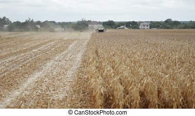 Maize grain harvester to gather corn on farmfield - Combine...