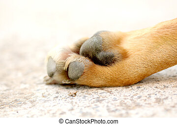 paw of an adult dog