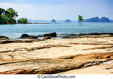 Khlong Muang Beach, Krabi, southern Thailand - Lone tree in...