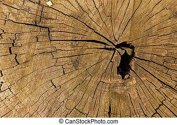 Cross section of the wood - Cross section of the old wood...
