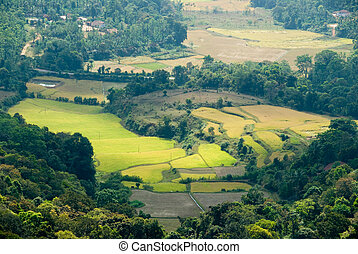 Valley - A valley in the Coorg (India) mountains